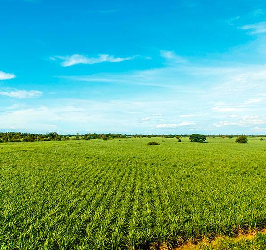 agroindustrial